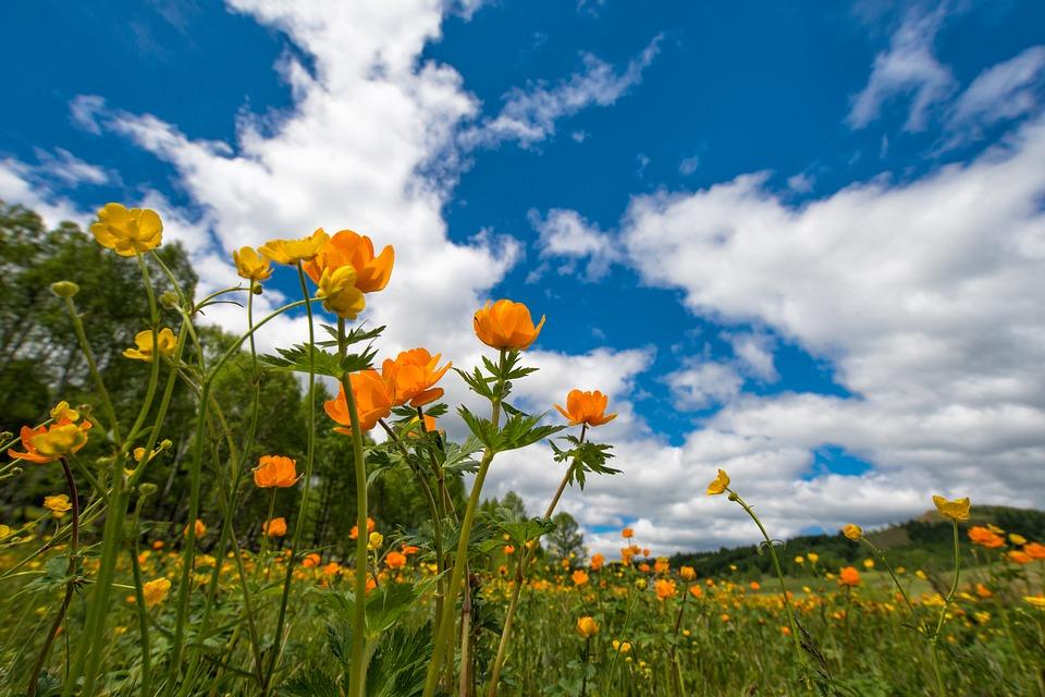 juni blomster