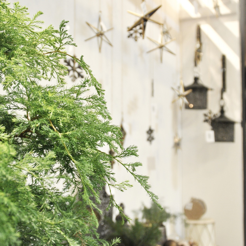 grøn gren og julepynt
