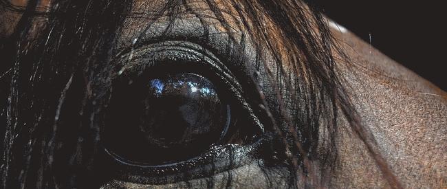 billede af hesteøje