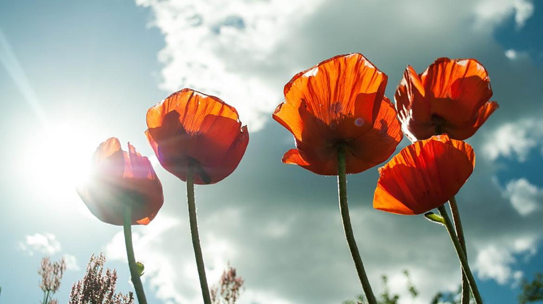 sommerblomster og blå himmel